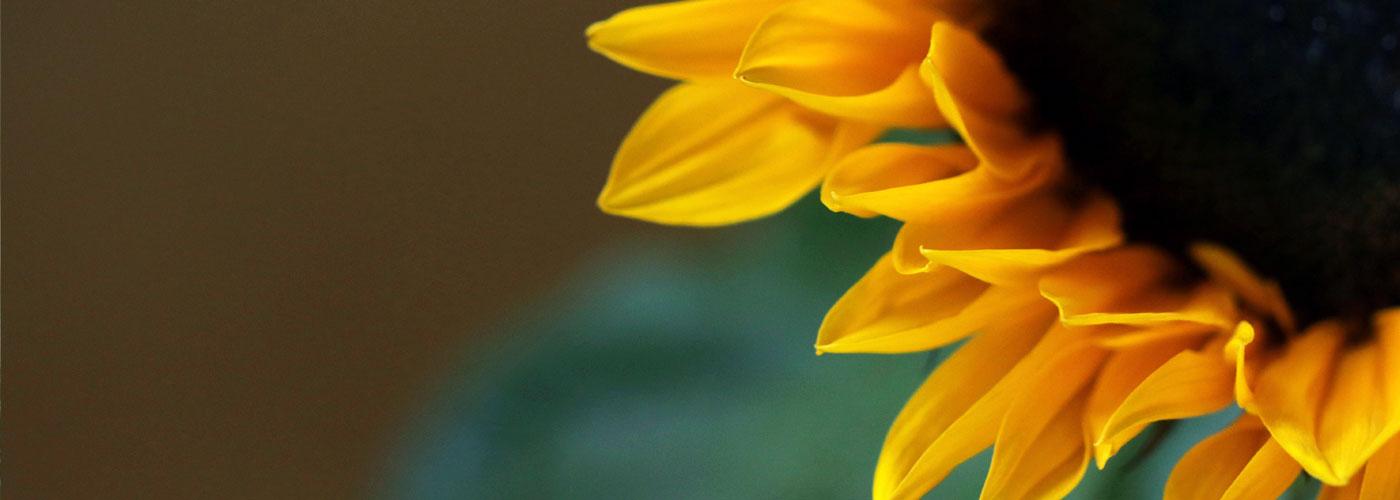 Praxis Oinone Buschendorff-Schaar Makroaufnahme Sonnenblume